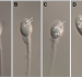 Sperm vacuoles negatively affect outcomes in intracytoplasmic morphologically selected sperm injection in terms of pregnancy, implantation, and live-birth rates