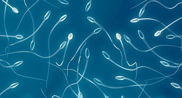 vacuoli spermatici