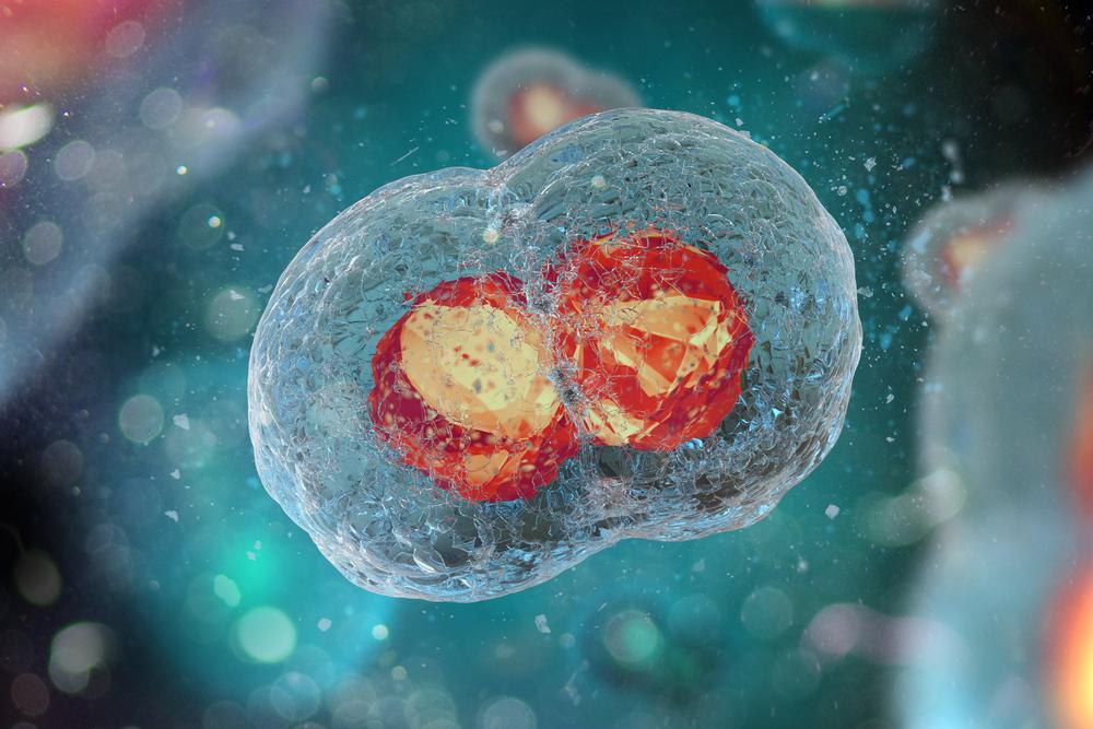Quantità e qualità della riserva ovarica: quali fattori influenzano il numero di blastocisti euploidi?