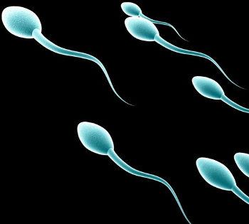 Tecniche di crioconservazione: congelamento spermatozoi