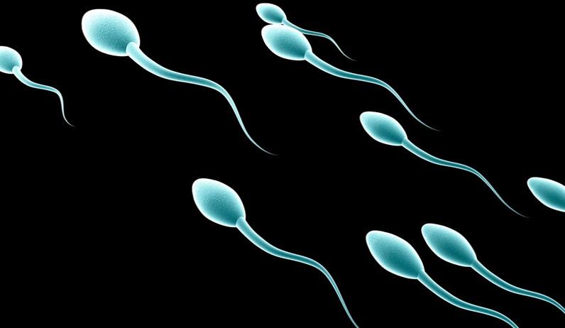 Congelamento spermatozoi